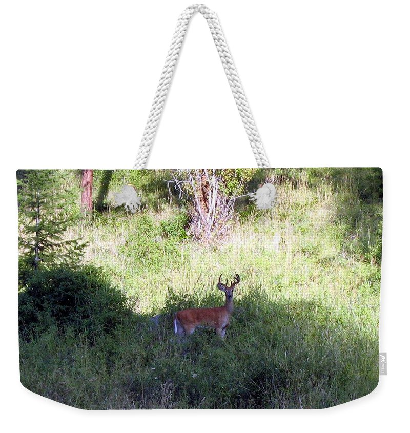 Deer Weekender Tote Bag featuring the photograph Watchful by Will Borden