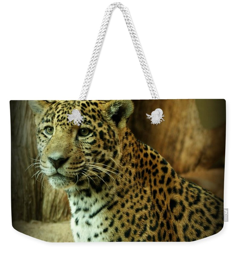 Jaguar Weekender Tote Bag featuring the photograph Watching by Sandy Keeton