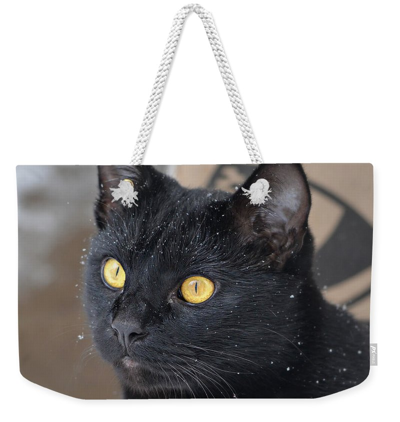 Black Cat Weekender Tote Bag featuring the photograph Watching Snow Fall by Ally White