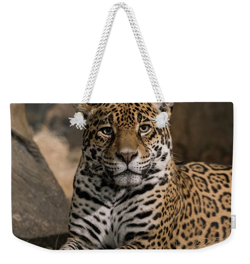 Leopard Weekender Tote Bag featuring the photograph Watching You by Thomas Visintainer