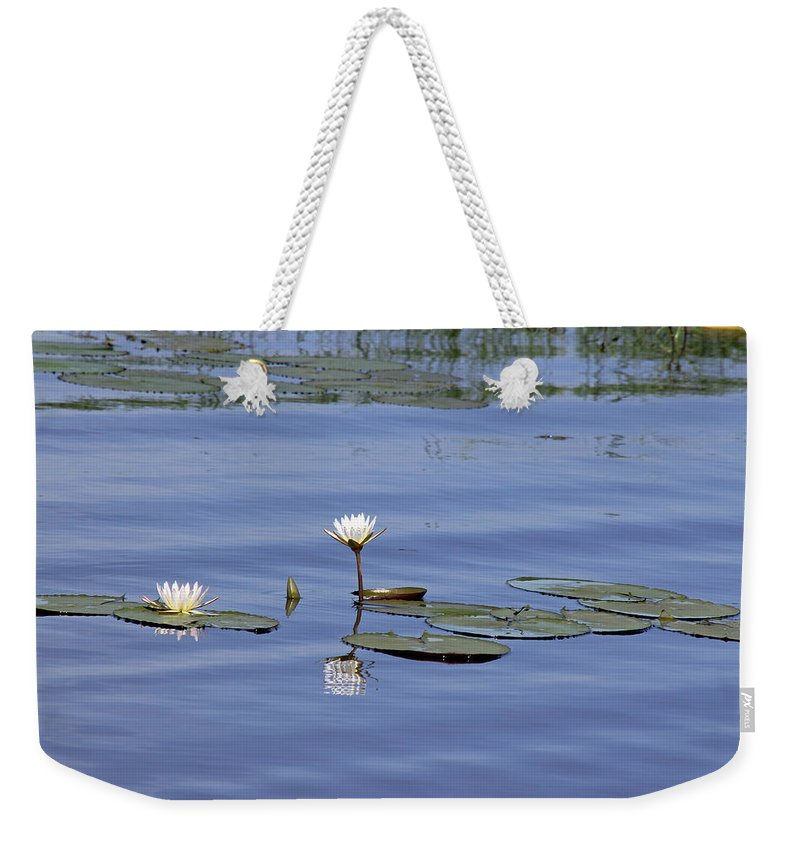 Botswana Weekender Tote Bag featuring the photograph Water Lilies by Tony Murtagh