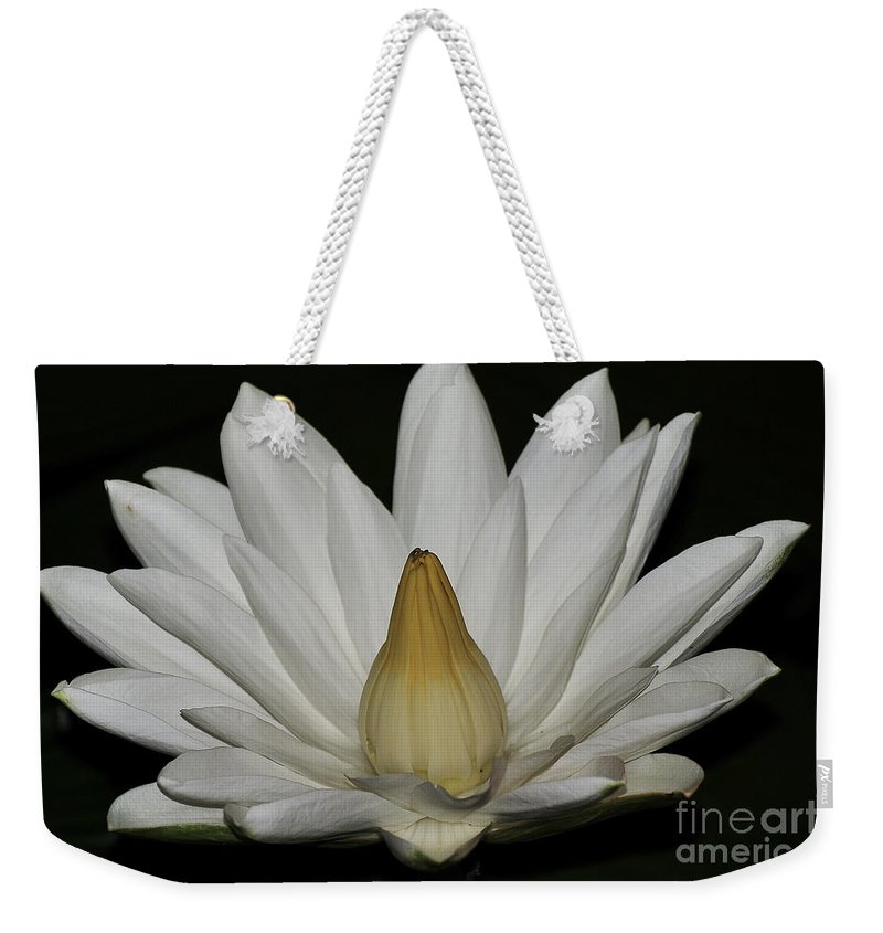 Water Lilies Weekender Tote Bag featuring the photograph Water Lily 23 by Terri Winkler