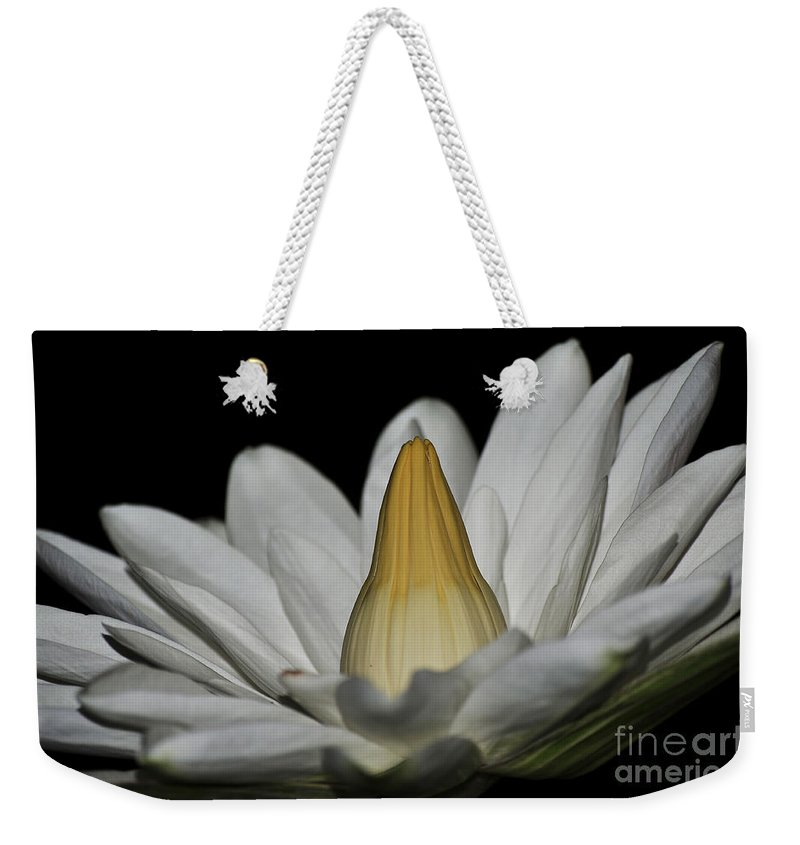 Water Lilies Weekender Tote Bag featuring the photograph water lily 25 White Night Blooming Water Lily I by Terri Winkler