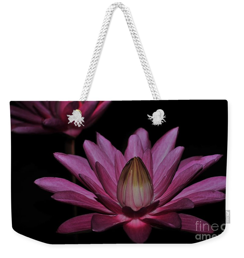 Water Lilies Weekender Tote Bag featuring the photograph water lily 27 Dark Pink Night Blooming Water Lily by Terri Winkler