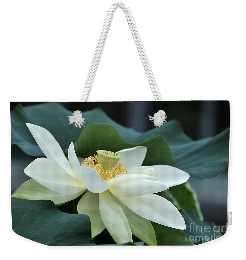 Water Lilies Weekender Tote Bag featuring the photograph water lily 34 Yellow Lotus I by Terri Winkler