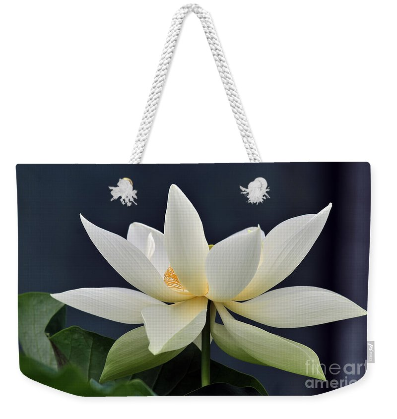Water Lilies Weekender Tote Bag featuring the photograph Water Lily 36 by Terri Winkler