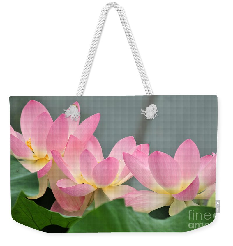 Water Weekender Tote Bag featuring the photograph water lily 57 Pink Lotus by Terri Winkler