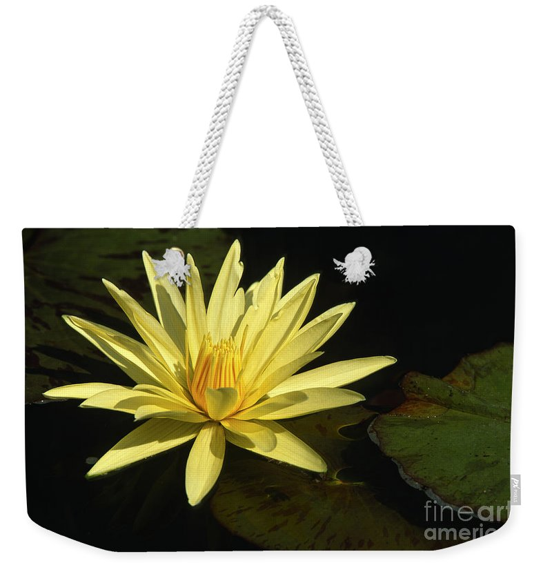 Flowers Weekender Tote Bag featuring the photograph Water Lily by Sandra Bronstein