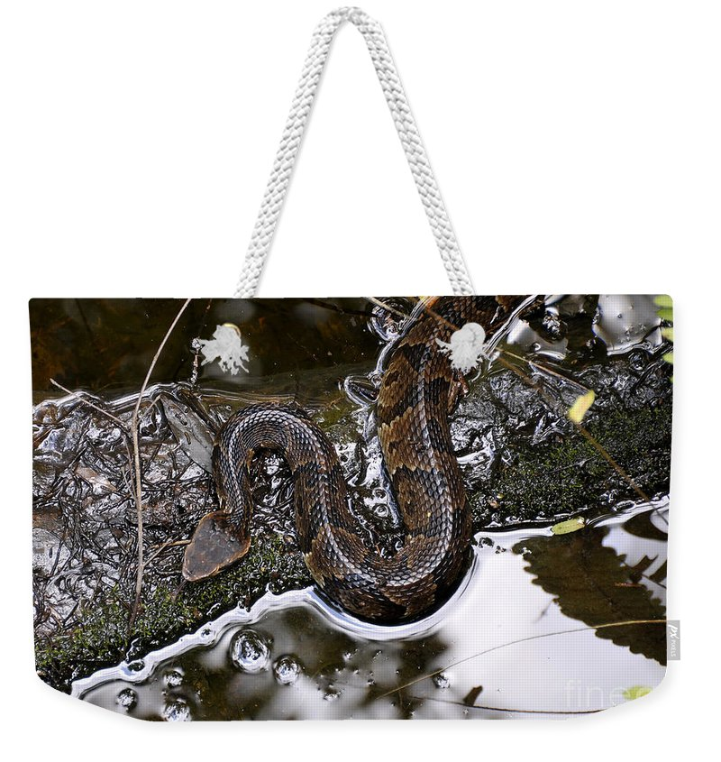 Water Moccasin Weekender Tote Bag featuring the photograph Water Moccasin by David Lee Thompson
