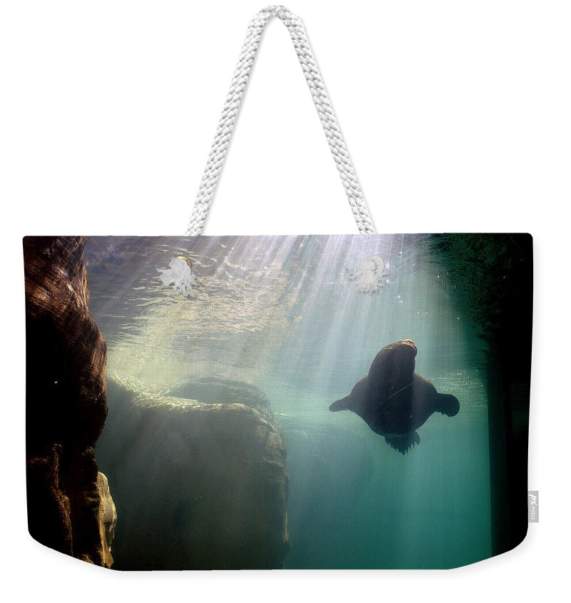 Memphis Zoo Weekender Tote Bag featuring the photograph Water World by D'Arcy Evans