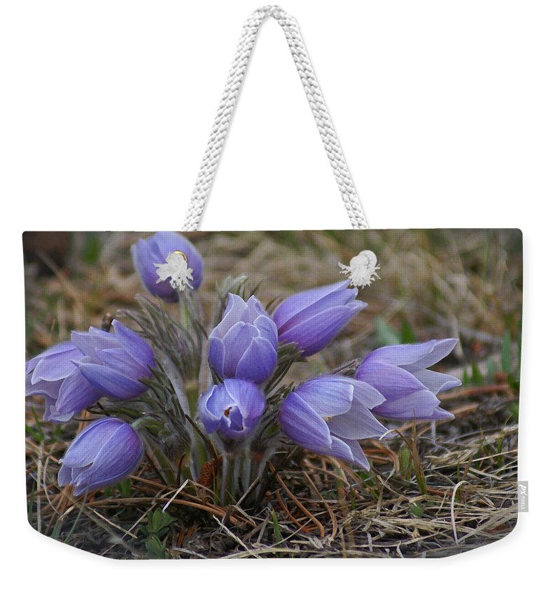 Pasque Flower Weekender Tote Bag featuring the photograph Watercolor Pasque Flowers by Heather Coen