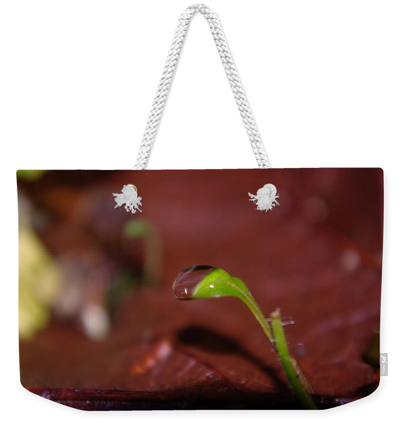 Water Drops Weekender Tote Bag featuring the photograph Waterdrop On A Litte Green Sprout by Jeff Swan