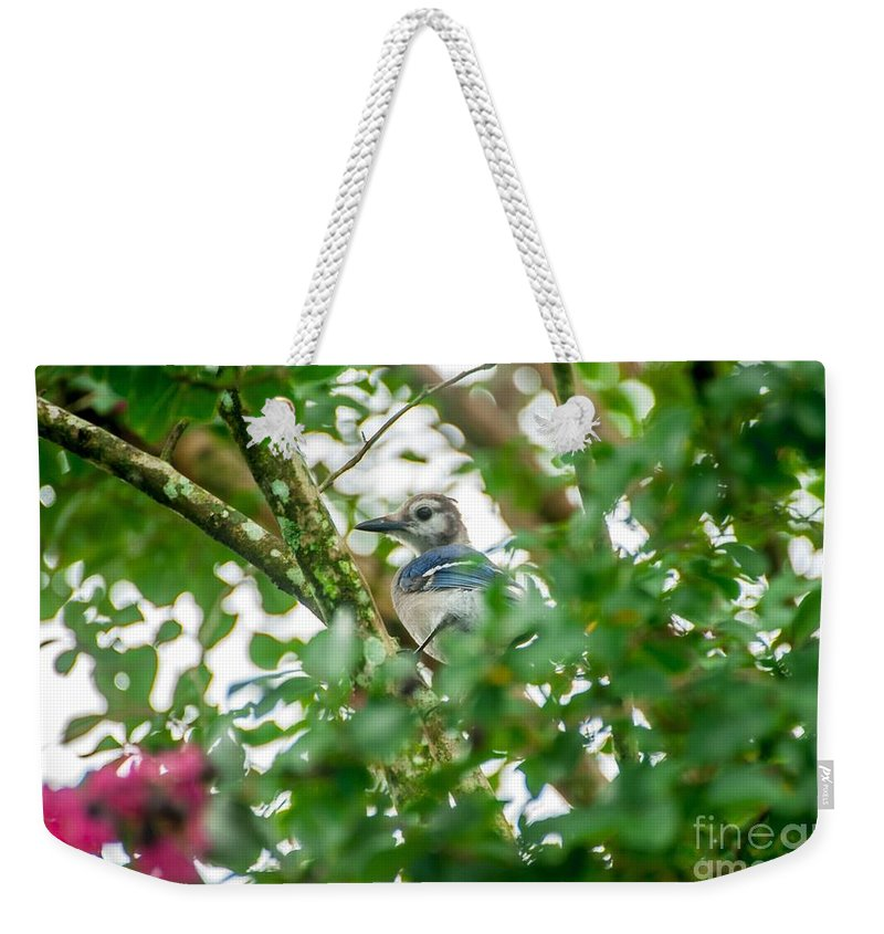 Blue Jay Weekender Tote Bag featuring the photograph Birds by Buddy Morrison