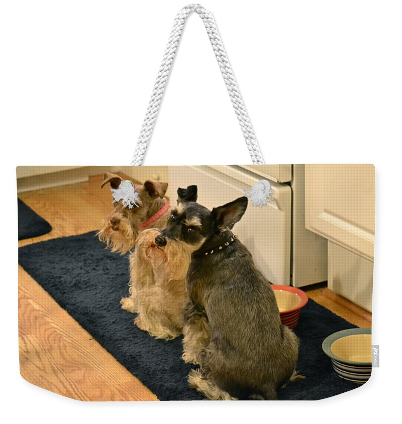 Pet Weekender Tote Bag featuring the photograph We Think It Is Time To Eat by Carol Bradley