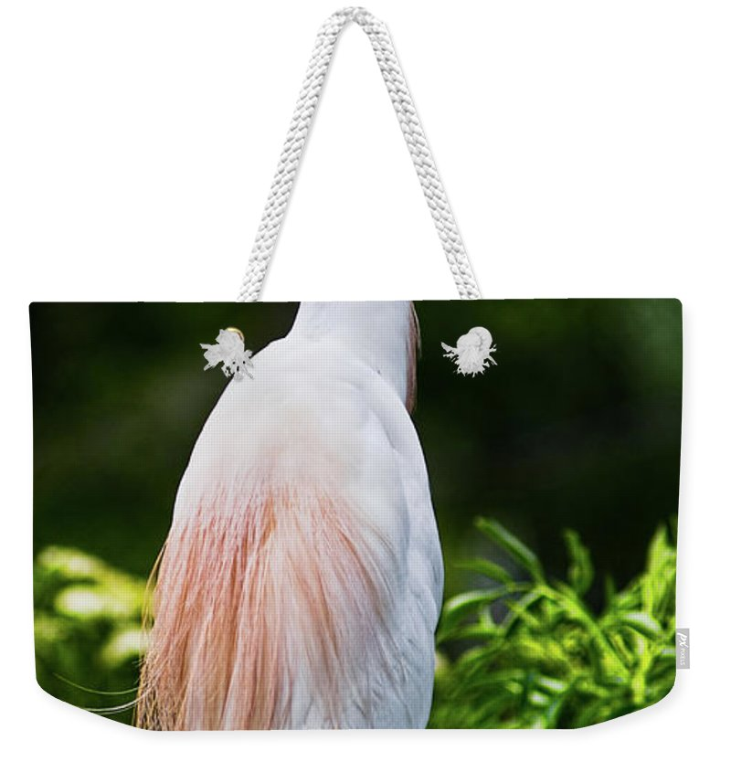 Cattle Egret Weekender Tote Bag featuring the photograph Wearing Spring Colors by Christopher Holmes