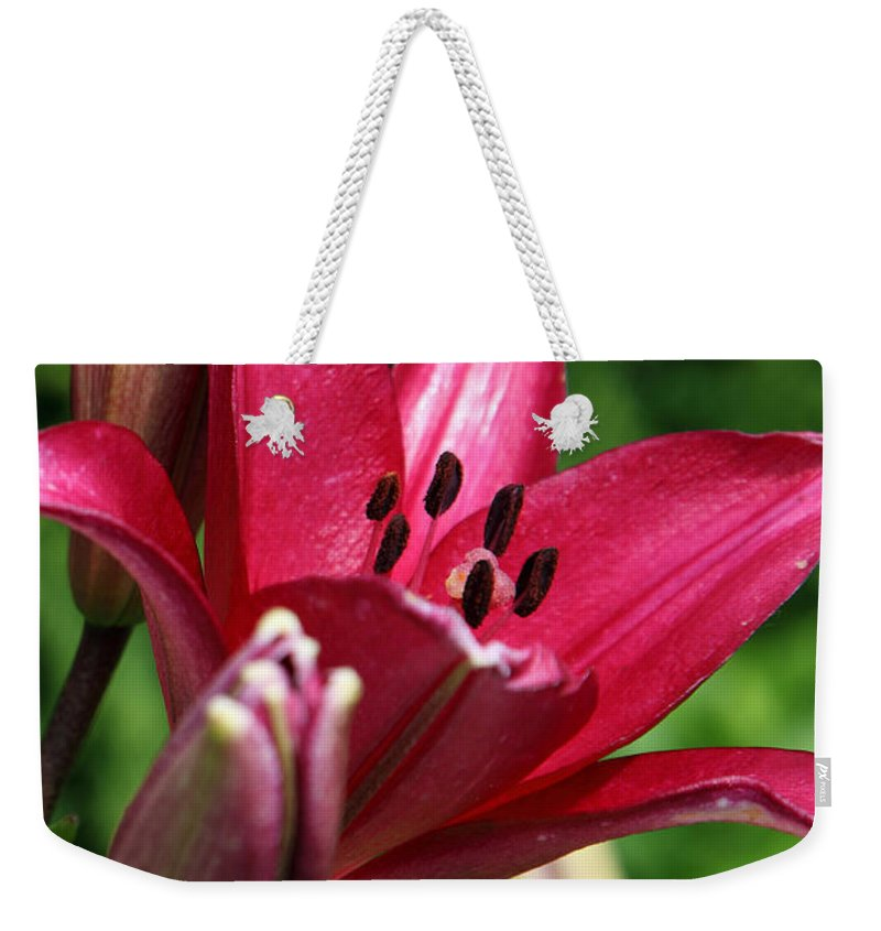 Lilly Weekender Tote Bag featuring the photograph Welcoming by Amanda Barcon