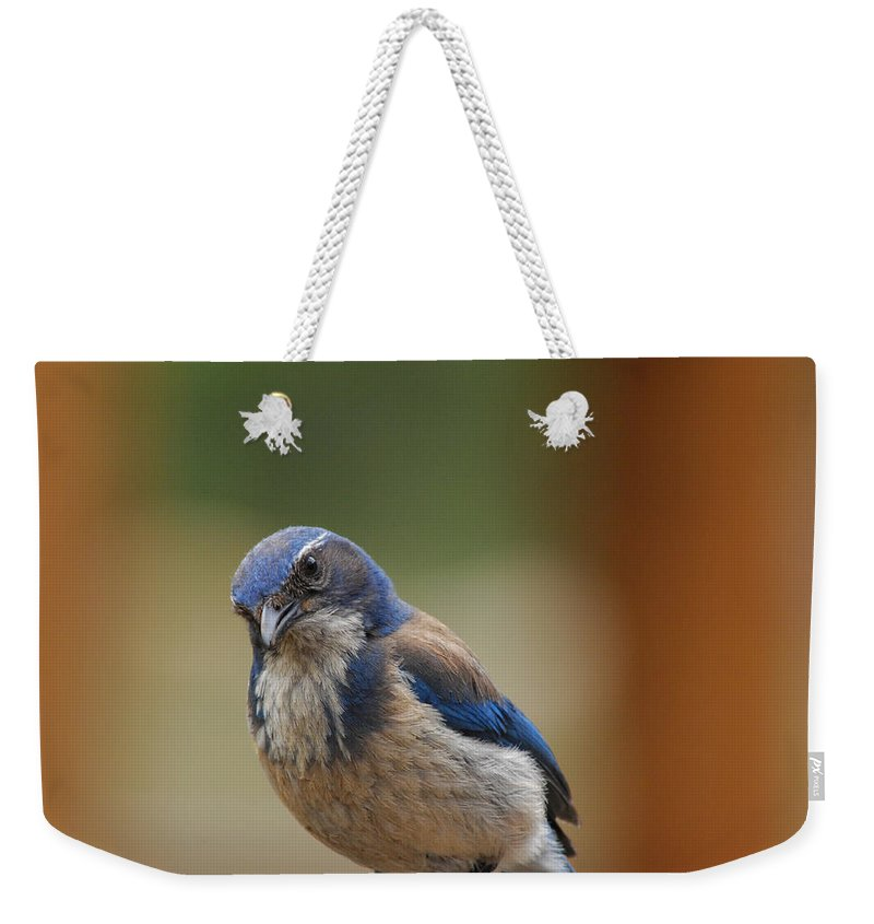 Mountain Blue Bird Weekender Tote Bag featuring the photograph Well Hello Beautiful by Donna Blackhall