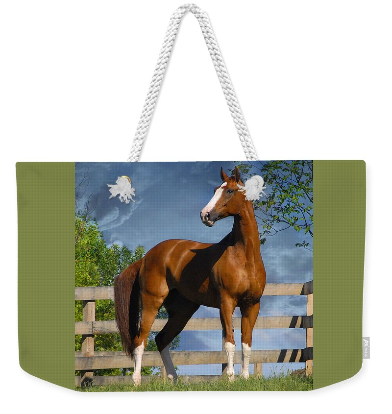 Horses Weekender Tote Bag featuring the photograph Welt Adel by Fran J Scott