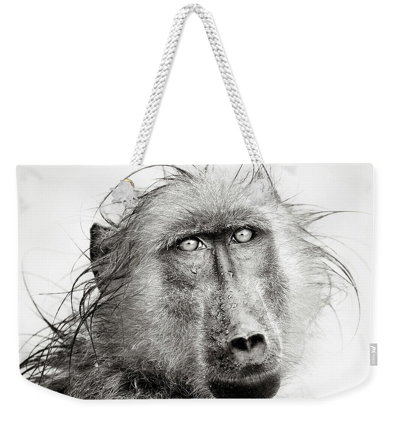 Baboon Weekender Tote Bag featuring the photograph Wet Baboon Portrait by Johan Swanepoel