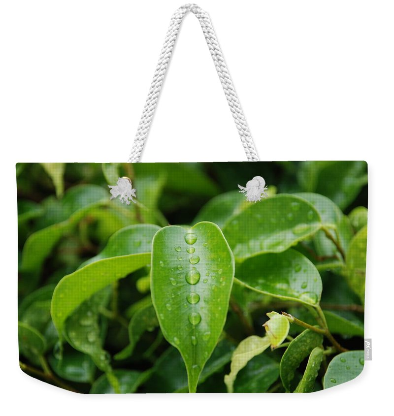 Macro Weekender Tote Bag featuring the photograph Wet Bushes by Rob Hans