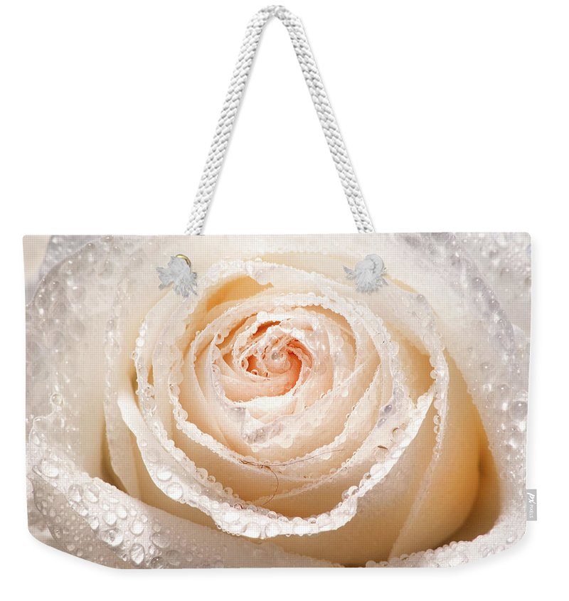 Rose Weekender Tote Bag featuring the photograph Wet White Rose by Don Johnson