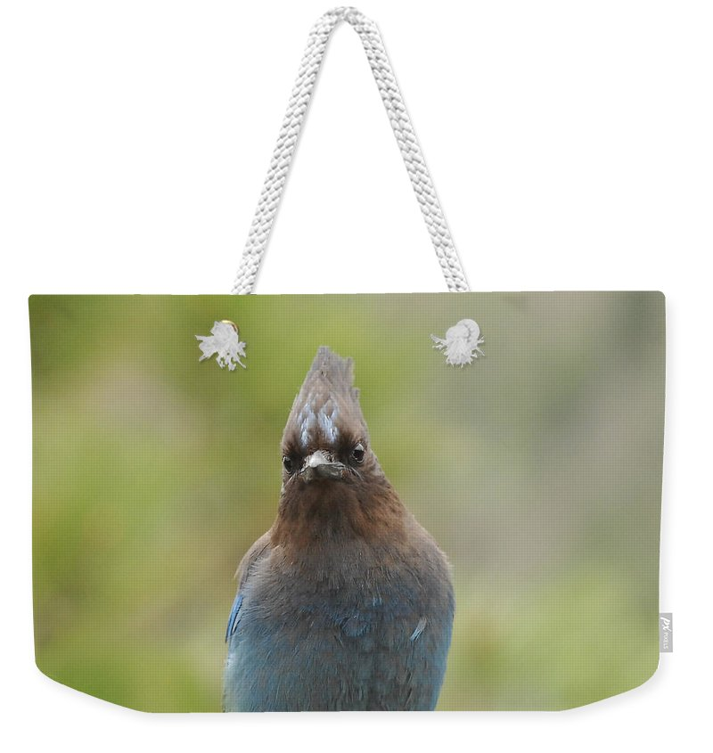 Bird Weekender Tote Bag featuring the photograph Whadda You Lookin At by Donna Blackhall