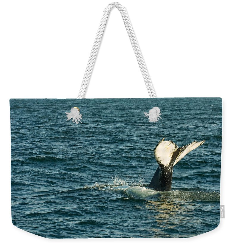 Whale Weekender Tote Bag featuring the photograph Whale by Sebastian Musial
