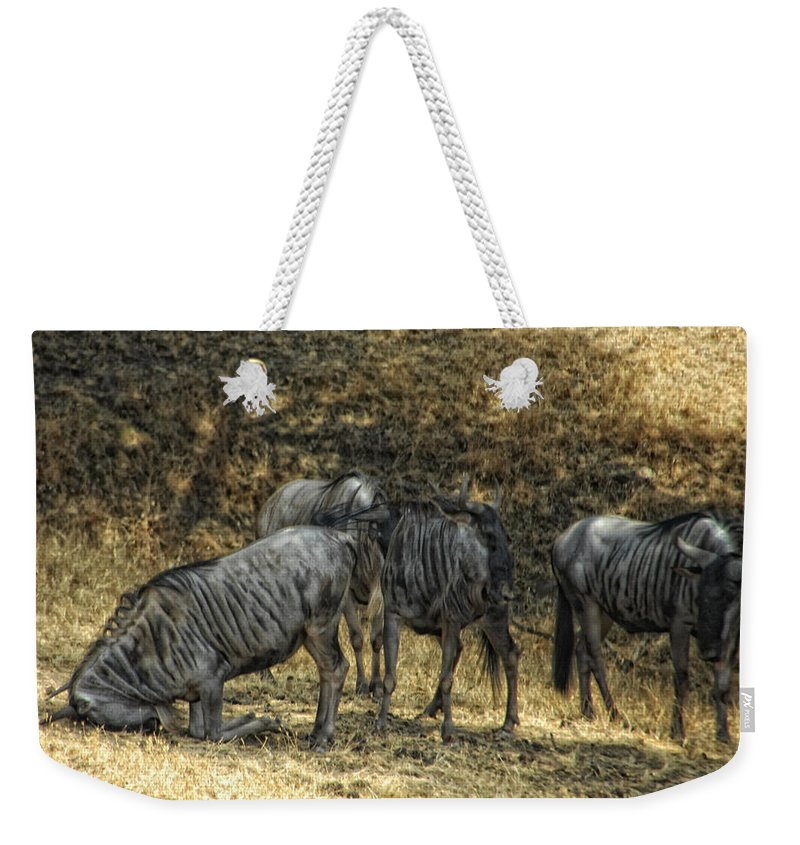 Wildebeast Weekender Tote Bag featuring the photograph What A Bewildering Day by Donna Blackhall