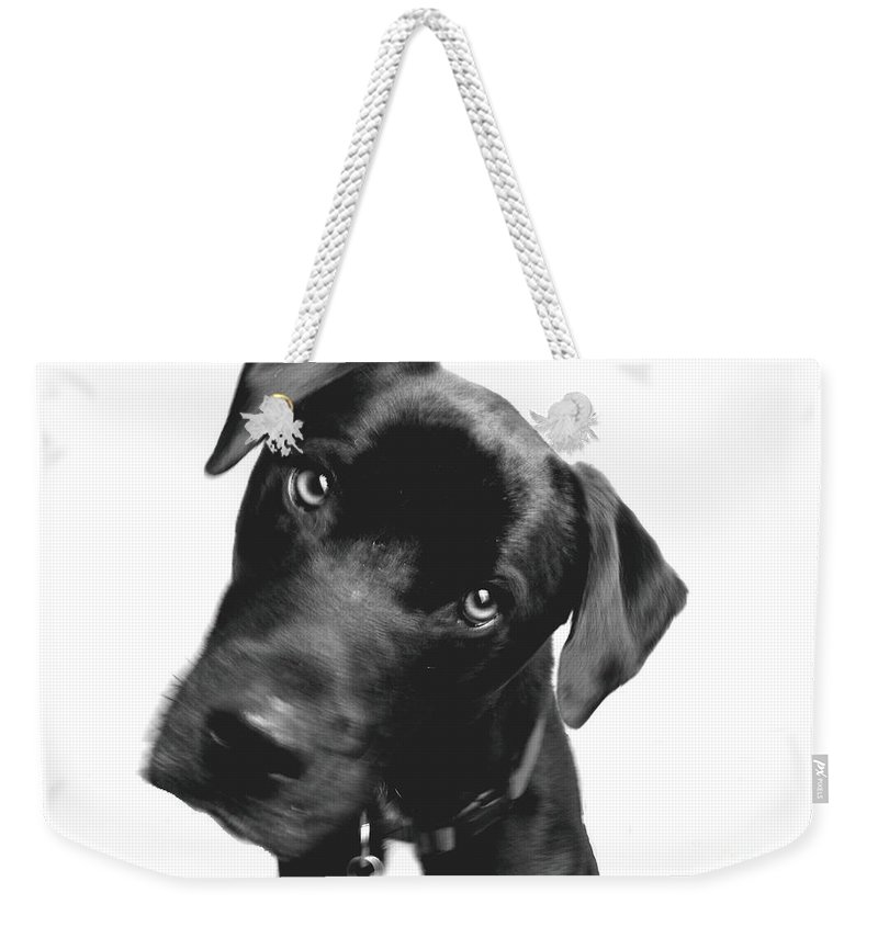 Labrador Weekender Tote Bag featuring the photograph What by Amanda Barcon