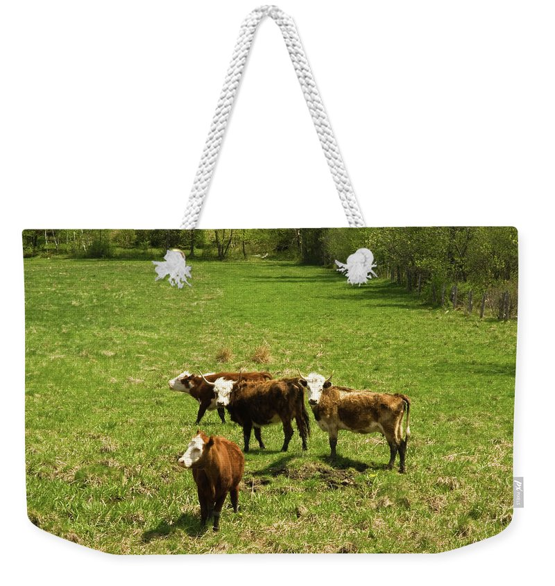 vermont Images Weekender Tote Bag featuring the photograph What Are You Looking At by Paul Mangold