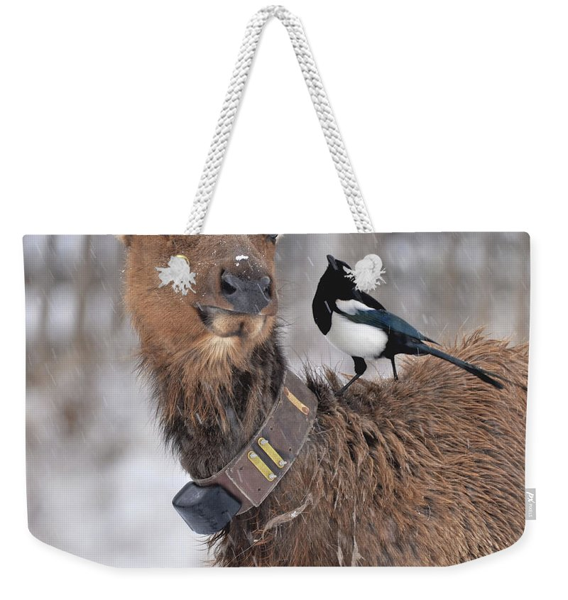 Elk Weekender Tote Bag featuring the photograph What Did You Say by Jonathan Hill