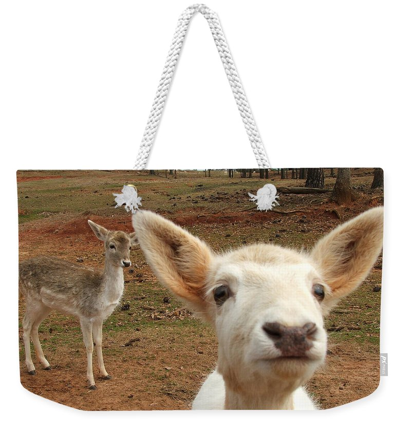 Deer Weekender Tote Bag featuring the photograph What Is That by Robert Meanor