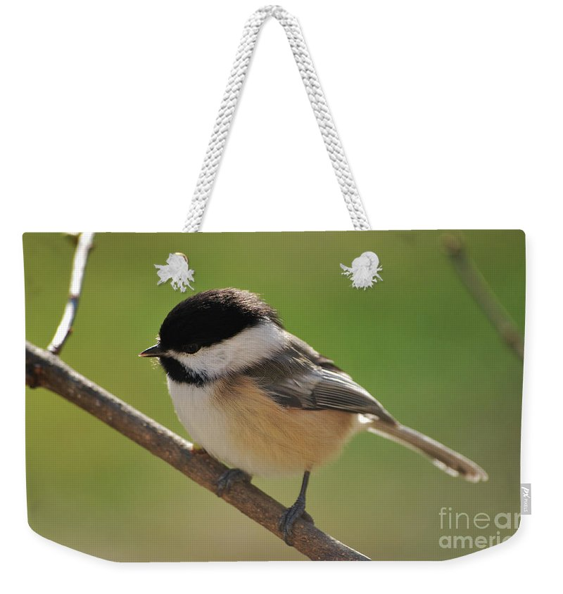 Chickadee Weekender Tote Bag featuring the photograph What To Do What To Do by Lori Tambakis