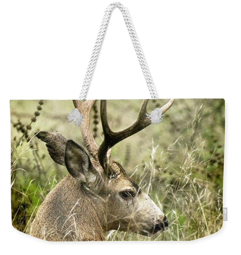 California Scenes Weekender Tote Bag featuring the photograph Whats The Point by Norman Andrus