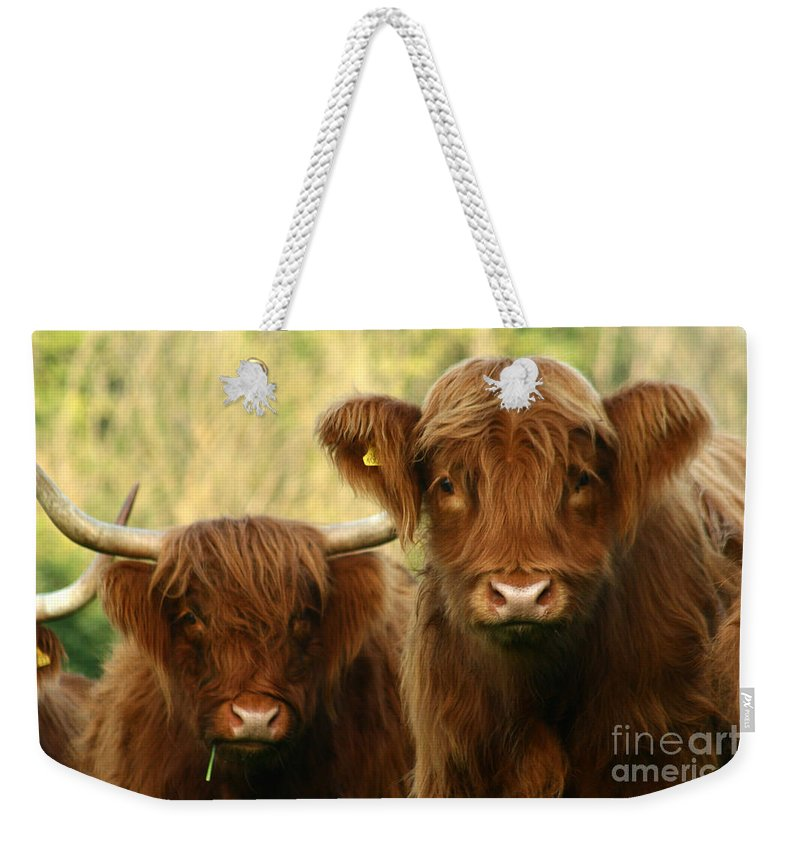 Cow Weekender Tote Bag featuring the photograph Whats Up by Angel Ciesniarska