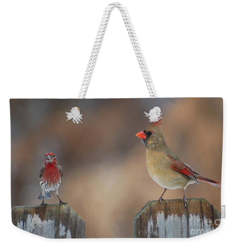 Cardinal Weekender Tote Bag featuring the photograph Whats Up by Todd Hostetter