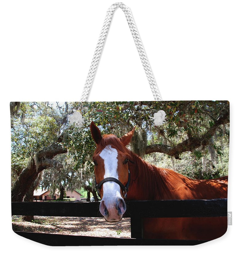 Horse Weekender Tote Bag featuring the photograph Whats Your Name by Susanne Van Hulst