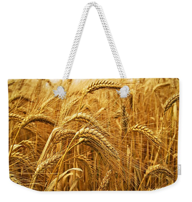 Wheat Weekender Tote Bag featuring the photograph Wheat by Elena Elisseeva