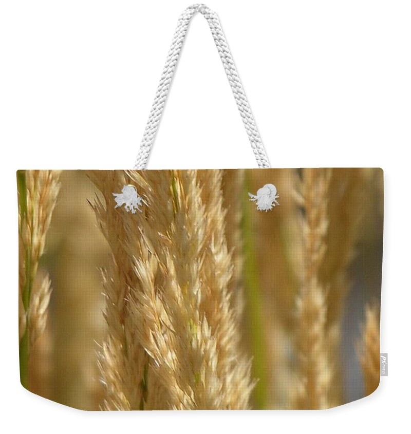 Wheat Weekender Tote Bag featuring the photograph Wheat Stalks by Diane Greco-Lesser