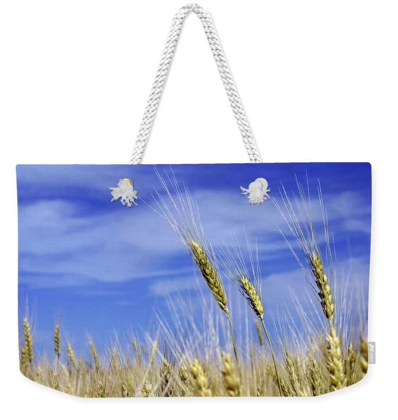 Wheat Weekender Tote Bag featuring the photograph Wheat Trio by Keith Armstrong