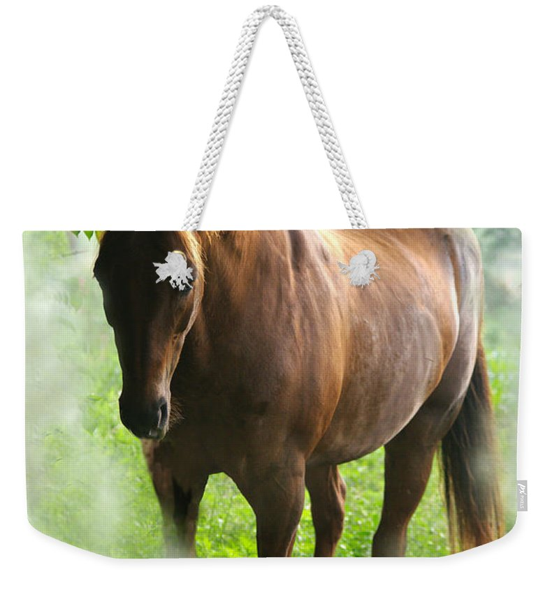 Jenny Gandert Weekender Tote Bag featuring the photograph When You Dream Of Horses by Jenny Gandert