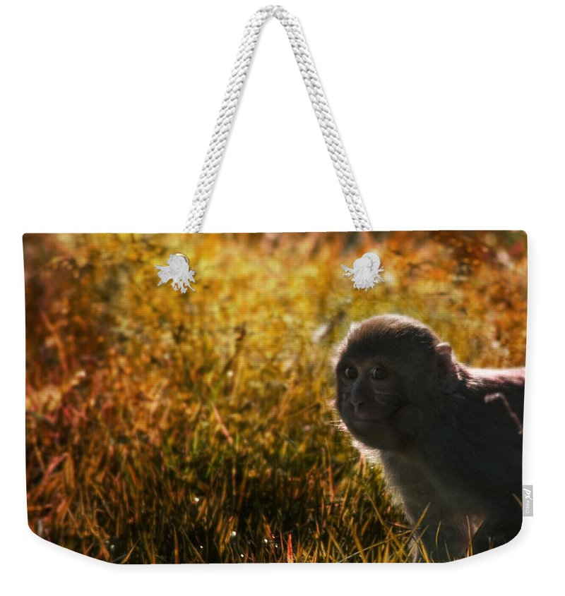 Monkey Weekender Tote Bag featuring the photograph Where Are You My Precious by Angel Tarantella