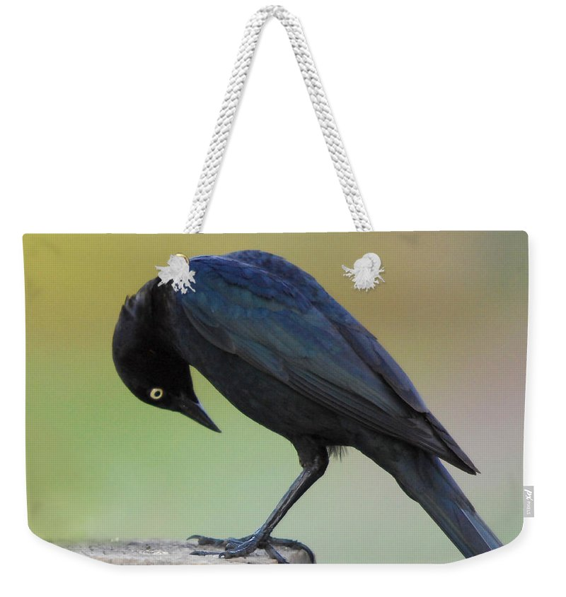 Black Bird Weekender Tote Bag featuring the photograph Where Did It Go by Donna Blackhall