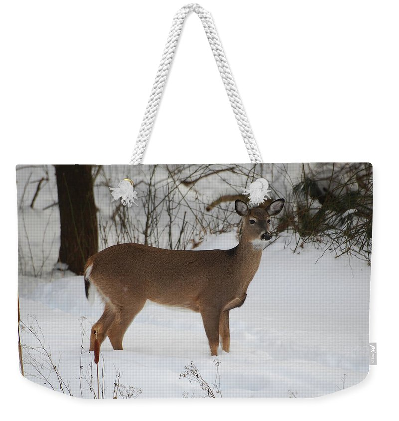 Deer Weekender Tote Bag featuring the photograph Where Is Everybody by Lori Tambakis