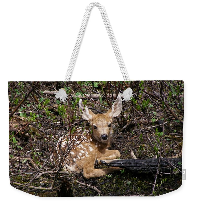 Deer Weekender Tote Bag featuring the photograph Where Mother Said Stay by DeeLon Merritt