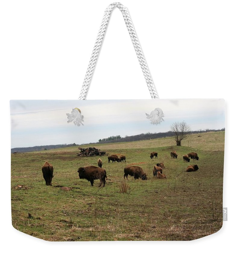 Buffalo Weekender Tote Bag featuring the photograph where the Buffalo Roam 3 by Lew Wescott