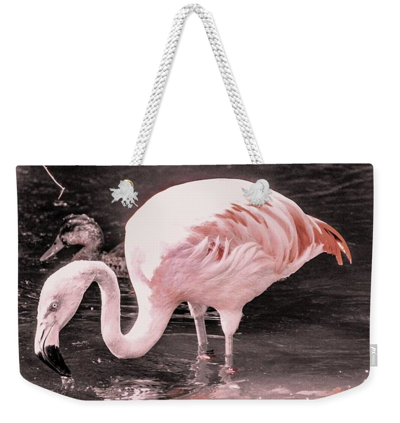 Flamingo Weekender Tote Bag featuring the photograph Whisper Pink Flamingo by Lisa Kilby