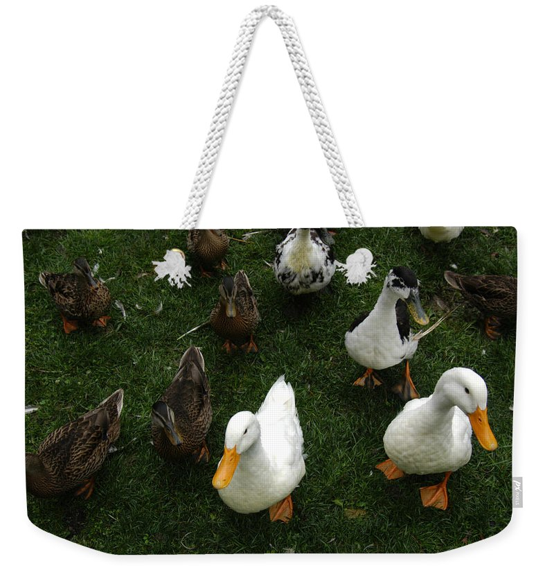State College Weekender Tote Bag featuring the photograph White And Brown Ducks by Stacy Gold
