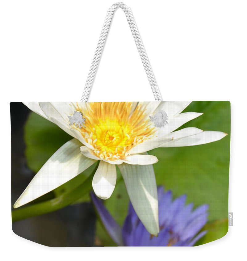 Purple Weekender Tote Bag featuring the photograph White And Purple Lotus Flowers At Golden Mount by AEC - Abundant Eight Creative