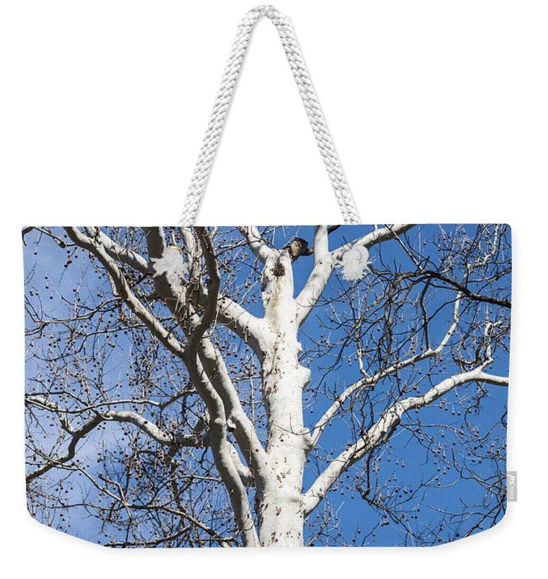 American Sycamore Tree Weekender Tote Bag featuring the photograph White Bark by Sally Weigand